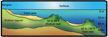 reef map